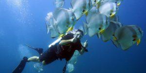 Phuket Scuba Divers