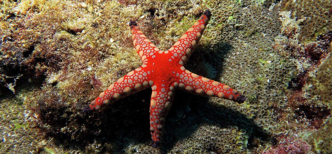 Krabi diving