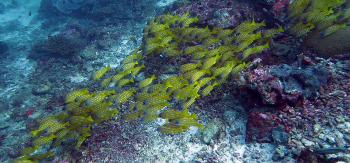 Similan Islands Anita's Reef