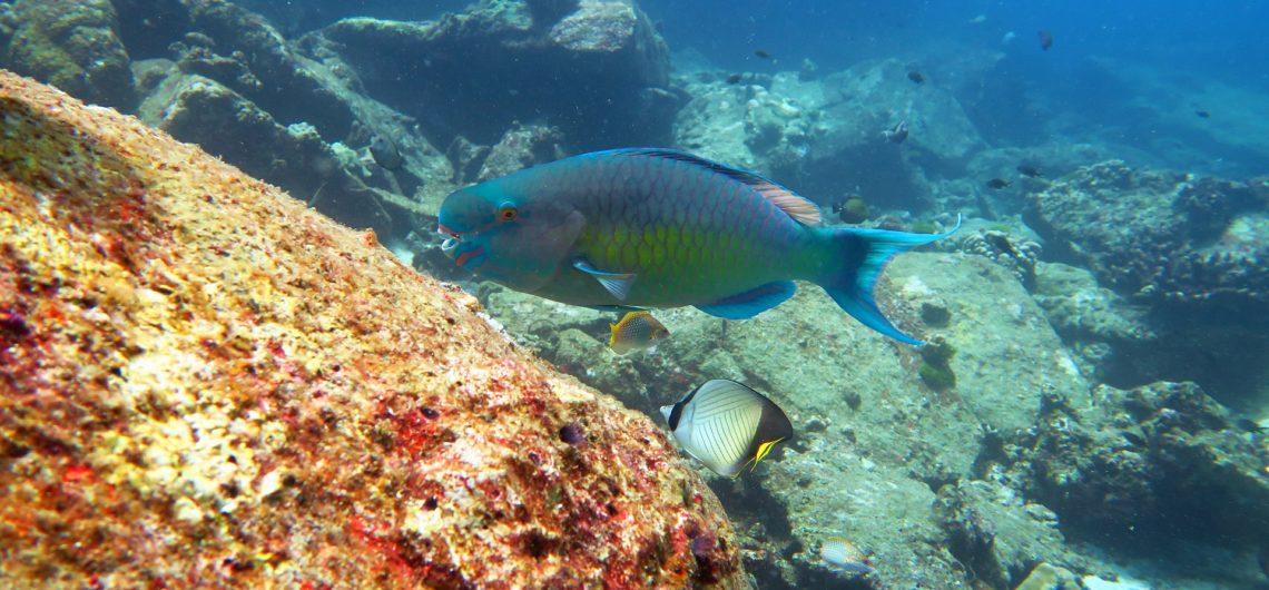 Similan Islands Shark Fin Reef