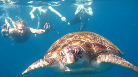 Snorkeling with a turtle at the Similan Islands with Oktavia liveaboard
